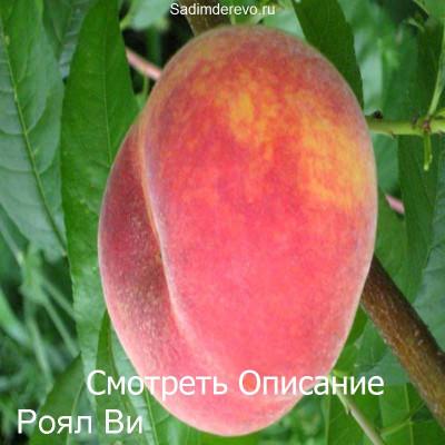 Персик Роял Ви